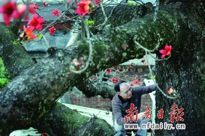 """广州市区有很多古树像红棉、樟树、榕树等都是白蚁喜欢的食物,出格是樟树,险些是""""十樟九空""""。颠末彭展金的灭治,在1000多棵古树名木中,99.8%的白蚁危害获得节制。"""