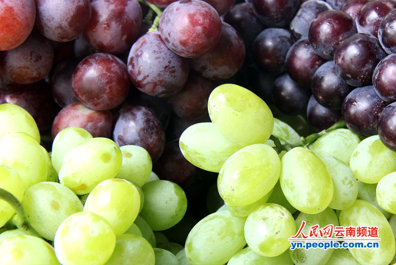 三种主要的葡萄品种红提(左上)、黑蜜(右上)、青提(下方).