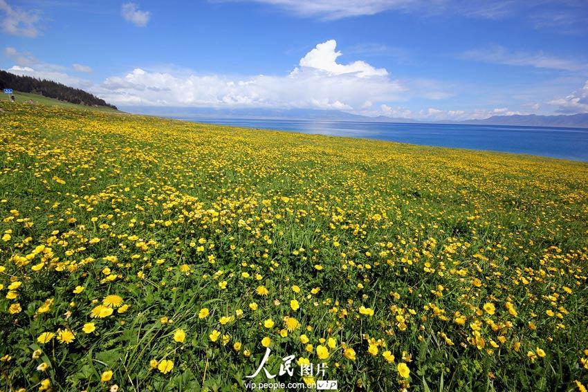 赛里木湖风景区是以塞里木湖为中心,包括湖周围风光旖旎的山地森林和