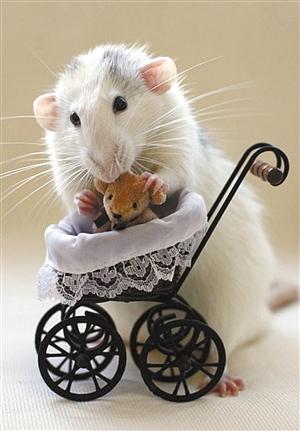 粘土仓鼠步骤图解