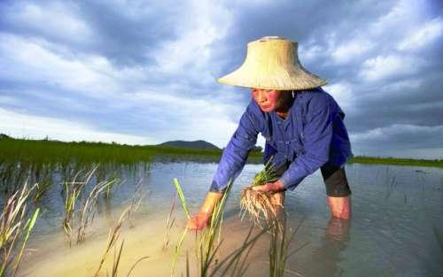 逃离土地,泰国青年不愿再种田