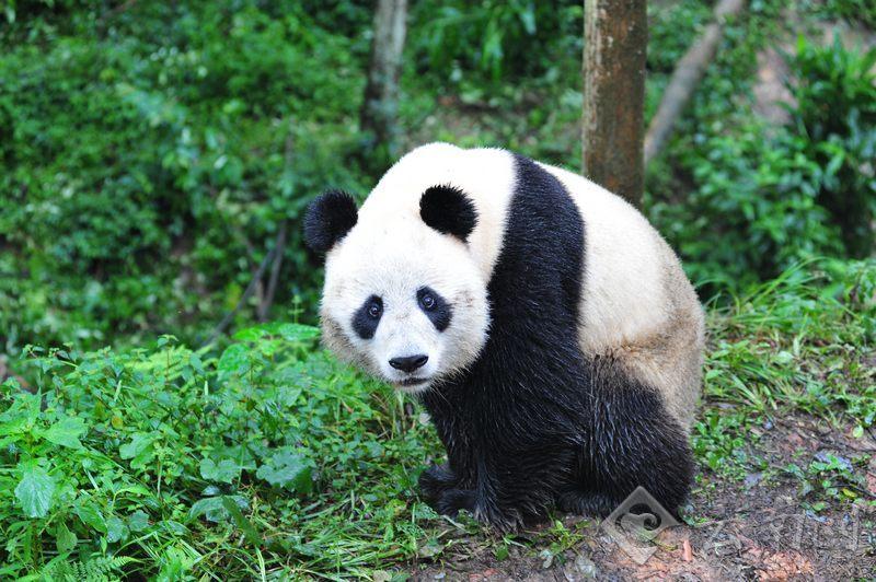 处了四年的云南野生动物园
