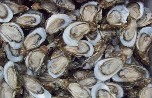 牡蛎(生蚝)