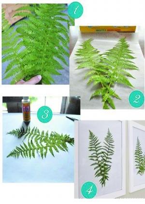 漂亮的植物标本装饰画