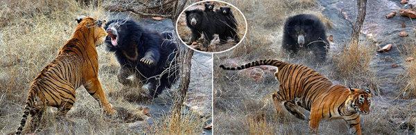 【图】野生动物保护幼仔感人瞬间