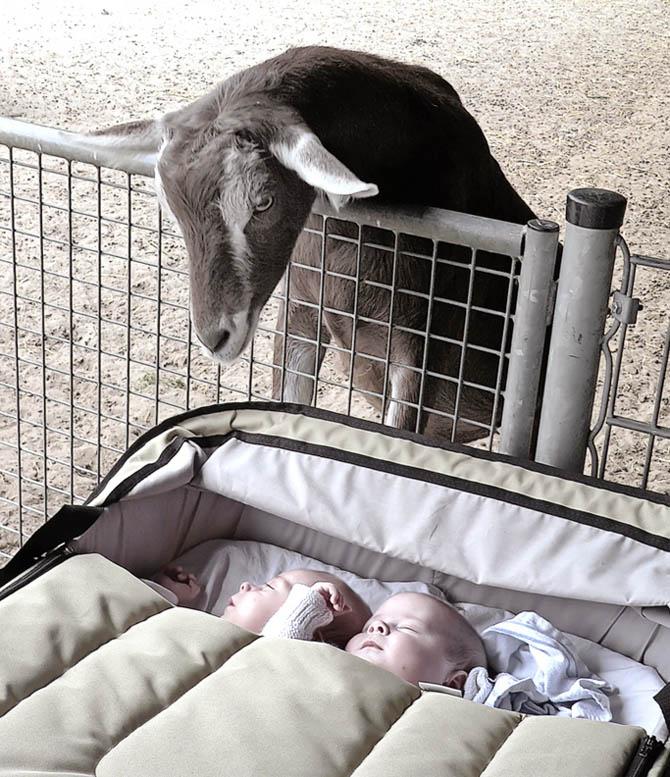 欧美小朋友睡觉可爱图片