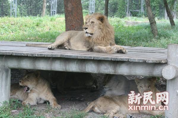 """上海野生动物园为动物避暑开""""凉""""方"""