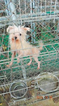 收容中心,台东动物防疫所为湮灭虐狗事证,变造公告,全面扑杀流浪狗
