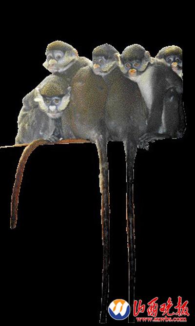 记者在太原动物园猿猴馆看到了这6位来自非洲的
