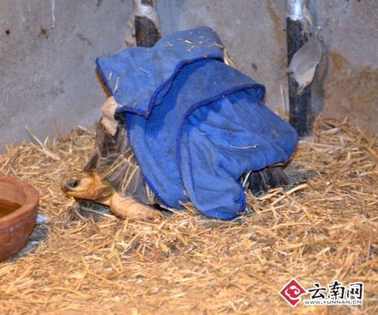 云南野生动物园动物应对降温各有妙招(图)