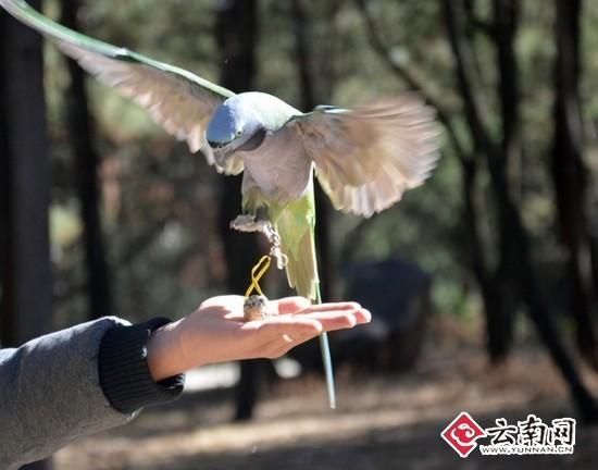 """云南野生动物园动物一起准备""""寻蛋大会""""(图)"""