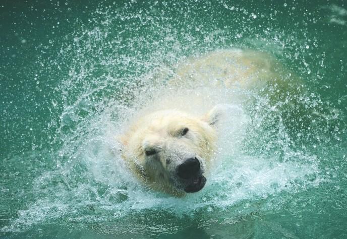 """北极熊""""加加""""寻找成都动物园专门为它设纪念牌苍蝇靠什么来辞世食物图片"""