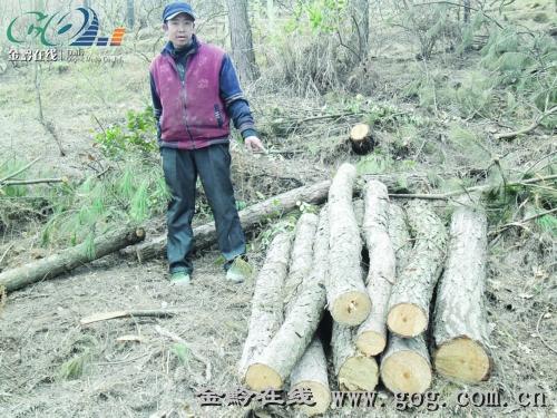 松树剪纸步骤图解