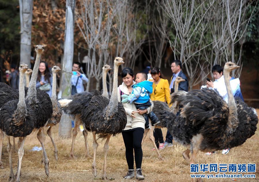昆明:与可爱动物欢度新春