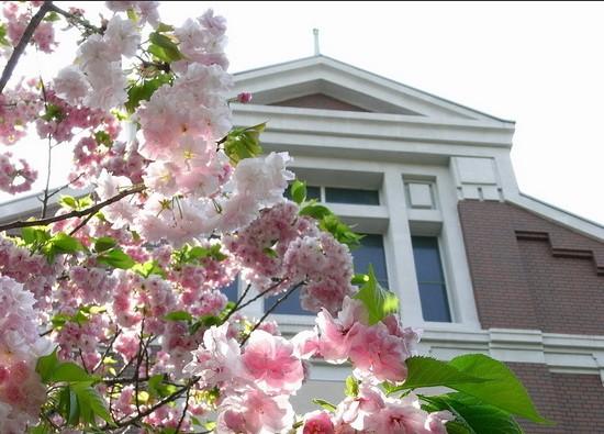 大阪造币局免费赏樱游