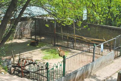 一个人的坚守私营南充动物园何去何从?
