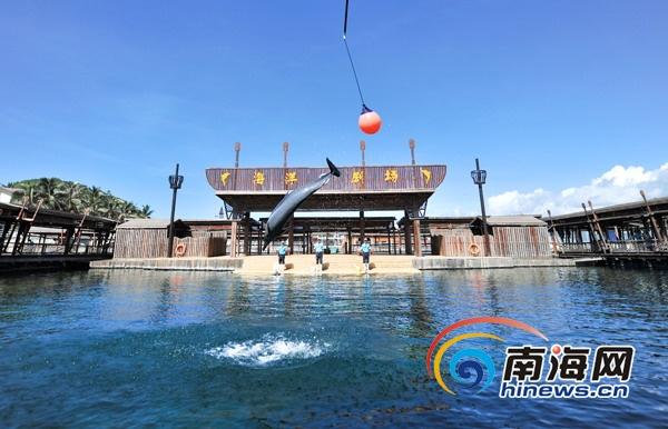 1.4米以下儿童六一可免费游分界洲岛看海豚