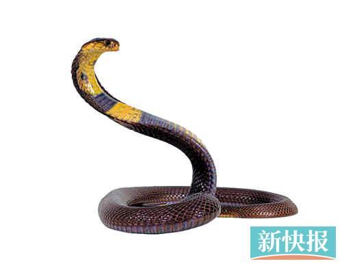 蛇伤高发期一晚5人被咬_资讯频道_凤凰网