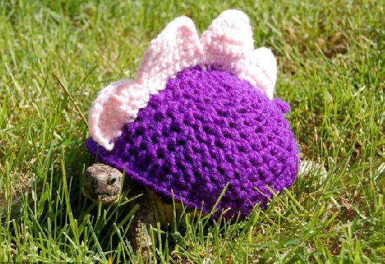 穿上搞怪可爱的漂亮毛衣 小龟变身鲨鱼,恐龙和南瓜