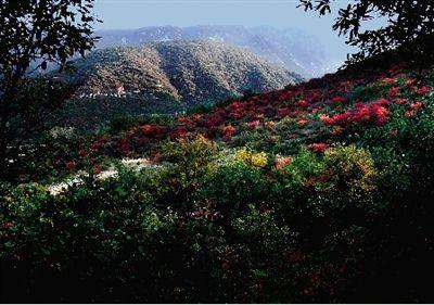 嵩山景区获评 全球低碳生态景区