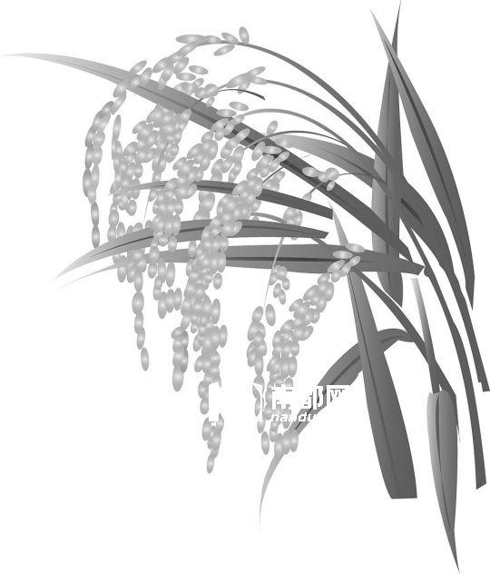 水稻图片简笔画图片_一片稻田简笔画
