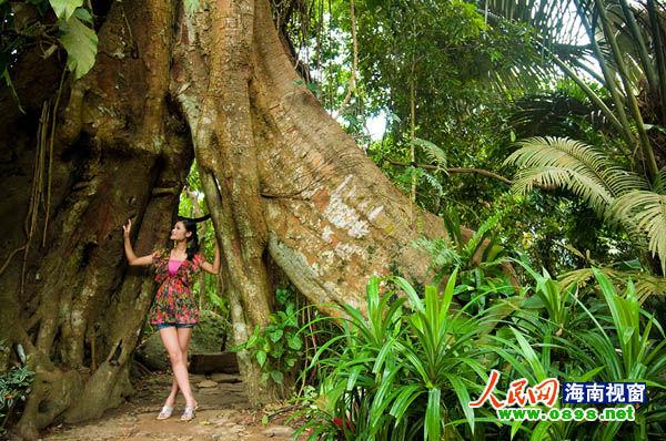 游客在景区雨林谷内与古树合影