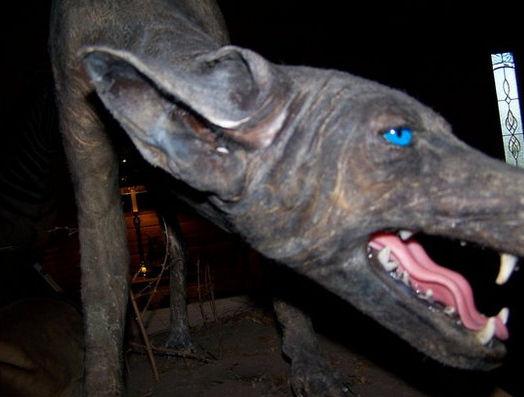 美一女子宣称捕获蓝皮蓝眼怪狗 该狗吸鸡血不吃肉