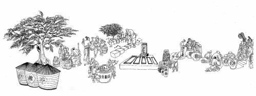 古井贡酒酿酒工艺手绘图