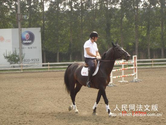 佩特斯先生骑乘天星调良马术进口比利时种公马Vamiro演示骑术-比利图片