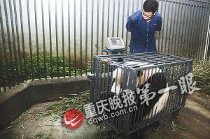 动物园称重大会别开生面_资讯频道_凤凰网