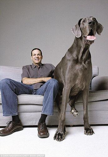 """全世界最高的狗""""大乔治""""(Giant George)10月17日在美国去世,存活年龄为8岁。"""