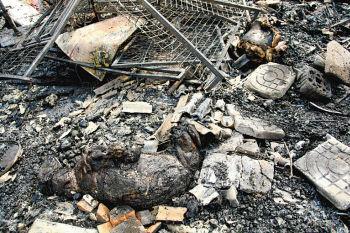 房子内养的鸡,猫,兔子等小动物都被烧焦