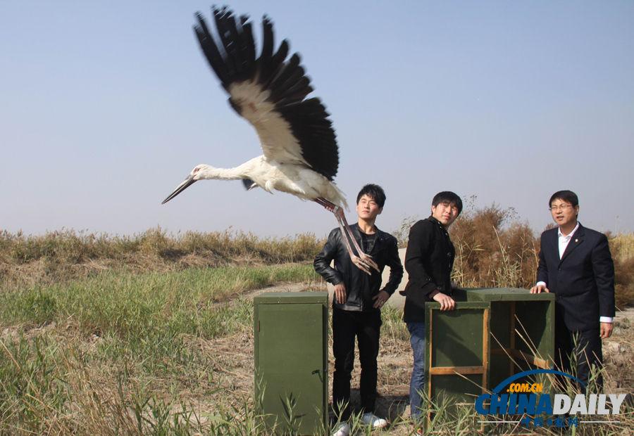 沧州野生动物救护中心的环保志愿者在沧州沿海湿地放飞国家一级保护
