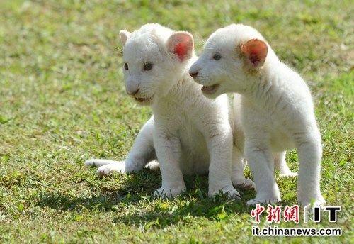也同时开展动物保护活动,其中包括对濒临灭绝动物的保护.