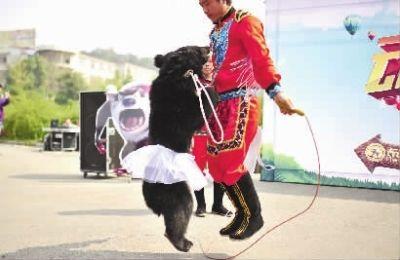 """动物狂欢节明天开幕 黑熊""""公主""""大象""""国王""""与你有约"""