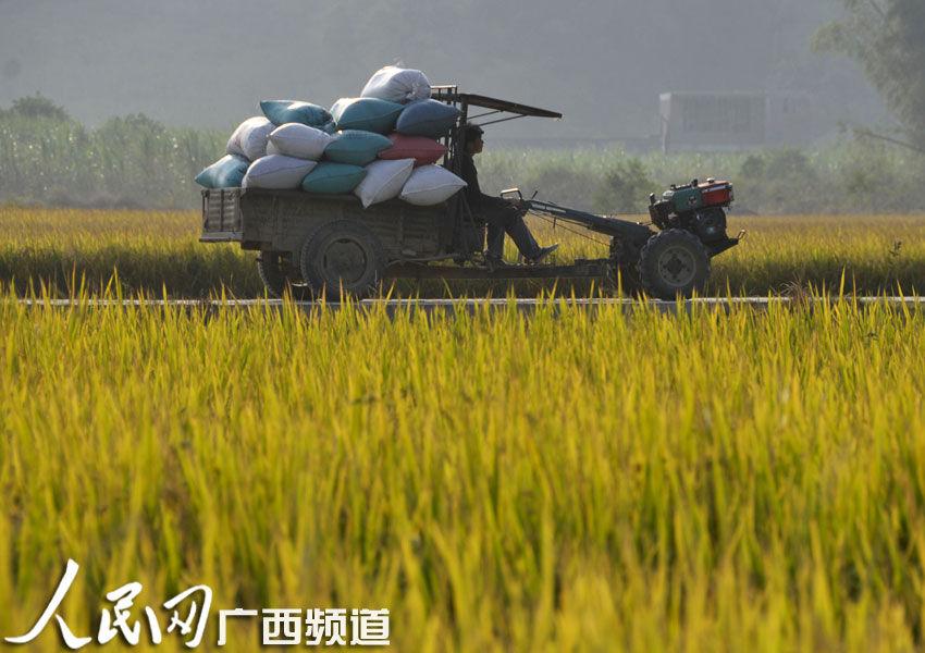 种水稻的步骤