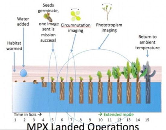 """火星植物实验(MPX)流程图 原标题:美国宇航局计划2021年在火星上建温室花园(图) 国际在线专稿:据英国《每日邮报》5月7日报道,现在的火星看起来似乎是个贫瘠的世界,但或许有天这里将出现盛开的鲜花和悬挂枝头的果实。美国宇航局计划2020年向火星发送植物种子,并于2021年在火星上建造温室花园。 美国宇航局计划利用2020年中期发射的火星探测器向火星上送植物种子,这个探测器将于2021年到达火星。这一计划名为""""火星植物实验""""(MPX),目的是在火星上创建温室。如果计划成功,可能"""