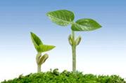 健康三人行:5种春季最该吃的苗芽菜