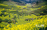 篁岭古村建村于明代中叶,距今有500多年历史。因其地多竹,修篁遍野,故名篁岭。每到春天万亩梯田上的油菜花都会形成一片黄色的花海,组成一幅幅美丽的春日画卷,吸引游客踏春赏花。