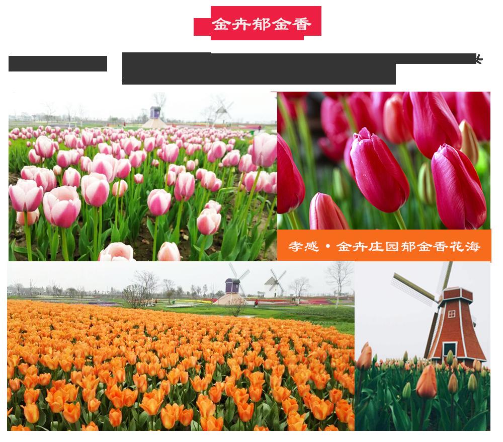 湖北2015赏花游地图_凤凰网湖北频道
