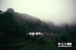 许多来此的寻茶的茶客都要走上一个多小时的山路,便可以看到一处云雾缭绕的茶园,这里正是最初狗牯脑茶叶的起源地。