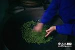 一片片鲜叶通过梁师傅的双手散发出清香。
