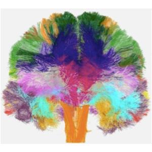 科学家完成人类脑白质微观结构图集