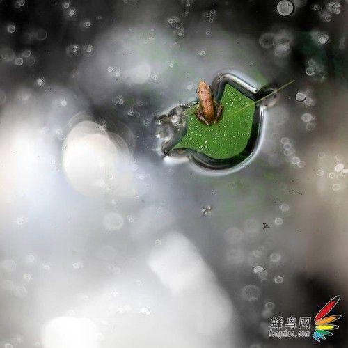 雨风 摄影作品 拍摄水面上的雨点,要尽量选择水面上有深色的倒影的地