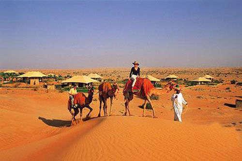 見識一下阿拉伯風情駱駝農場圖片