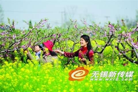 桃花春色暖先开(陈大春/摄)