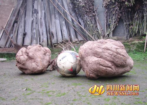 巨型红薯图片