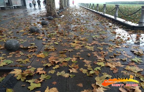 �r,_邯郸:寒潮来袭催落叶 环卫工人们雨天忙